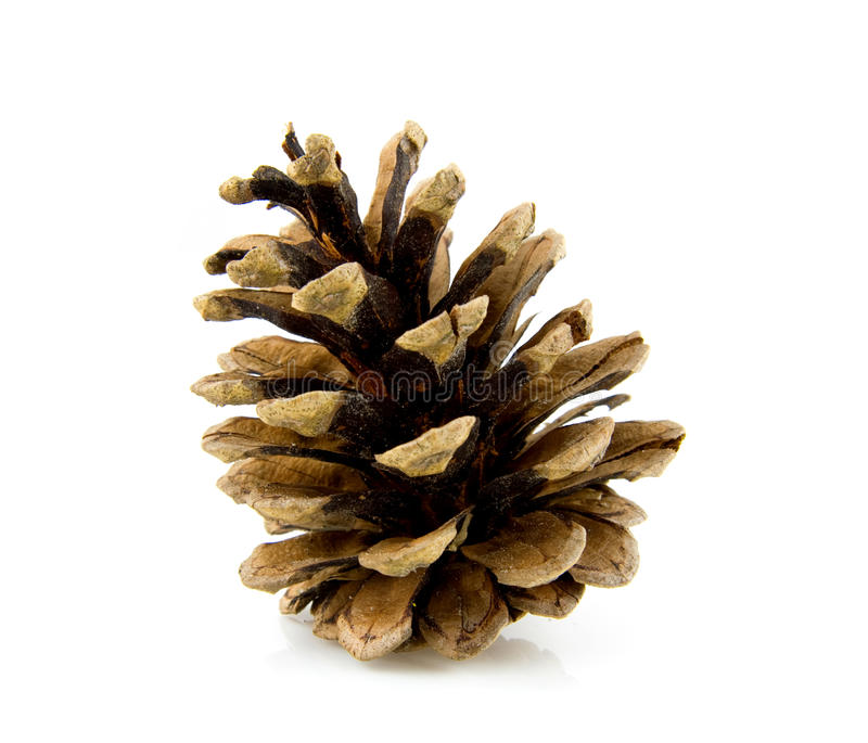 Download Pine cone stock photo. Image of wood, forest, nature, cone - 9762020