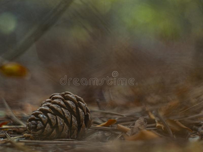 Pine cone in autumn foliage in the forest with a beautiful blurred background.  stock photography