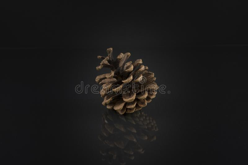 Pine cone on black. Artistic pine cone photo royalty free stock images