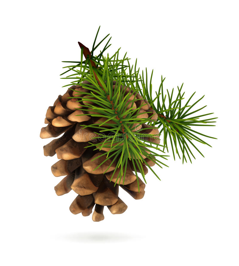 pine cone with branch stock vector image 57001734