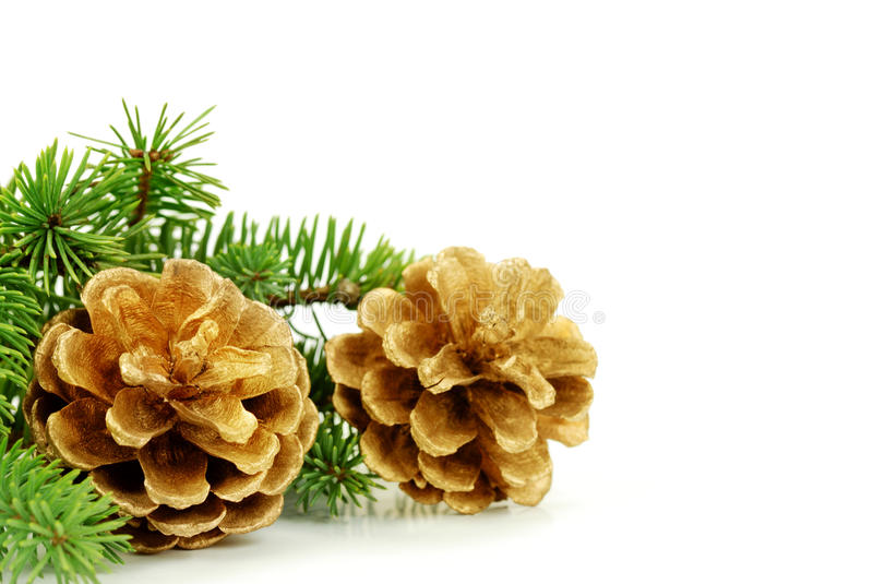 Pine Cone With Branch On The White Background Stock Image