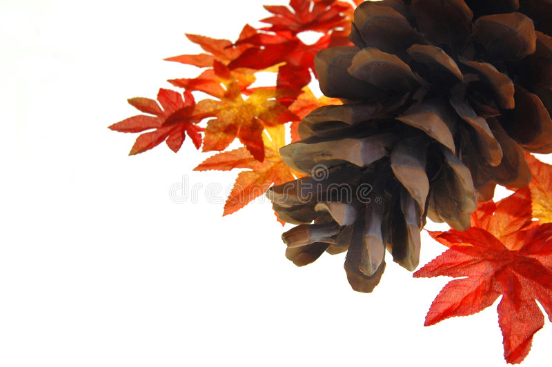 Pine cone and fall leaves. A large pine cone and fall leaves on a white background. Autumn