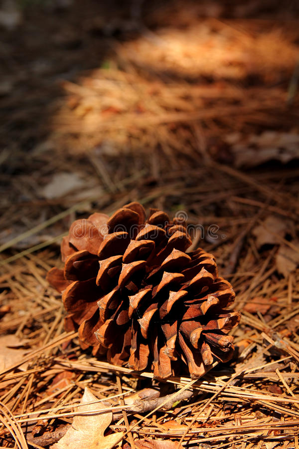 Download Pine cone stock image. Image of foliage, decoration, color - 32349895