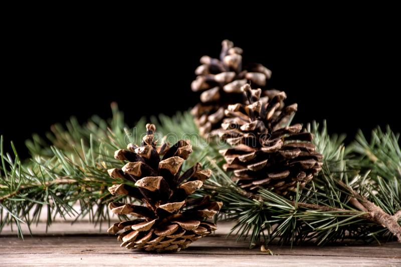 Pine cone on fir tree branch on wooden desk stock image