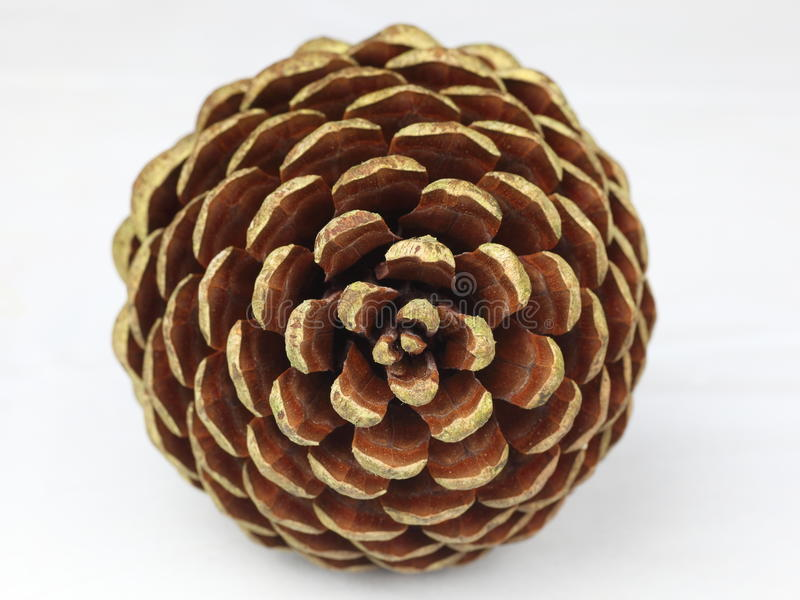 Pine cone tip. The tip of a pine cone showing its scales - isolated, on neutral background royalty free stock photo