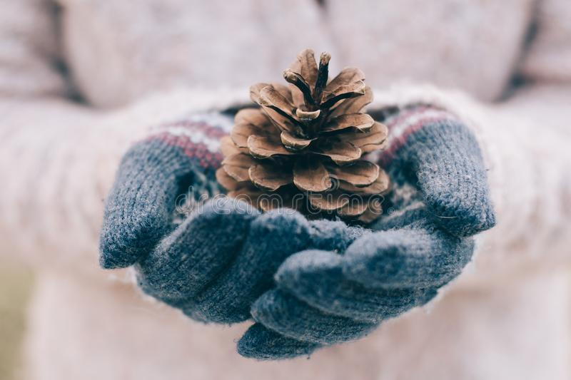 Pine cone in hand. Woman in gloves holding a fir cone. stock photos