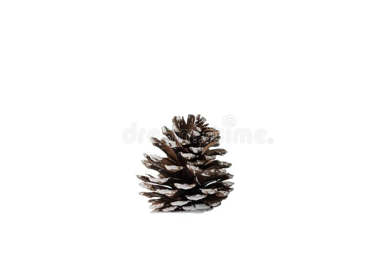 Pine cone isolated on white background royalty free stock image