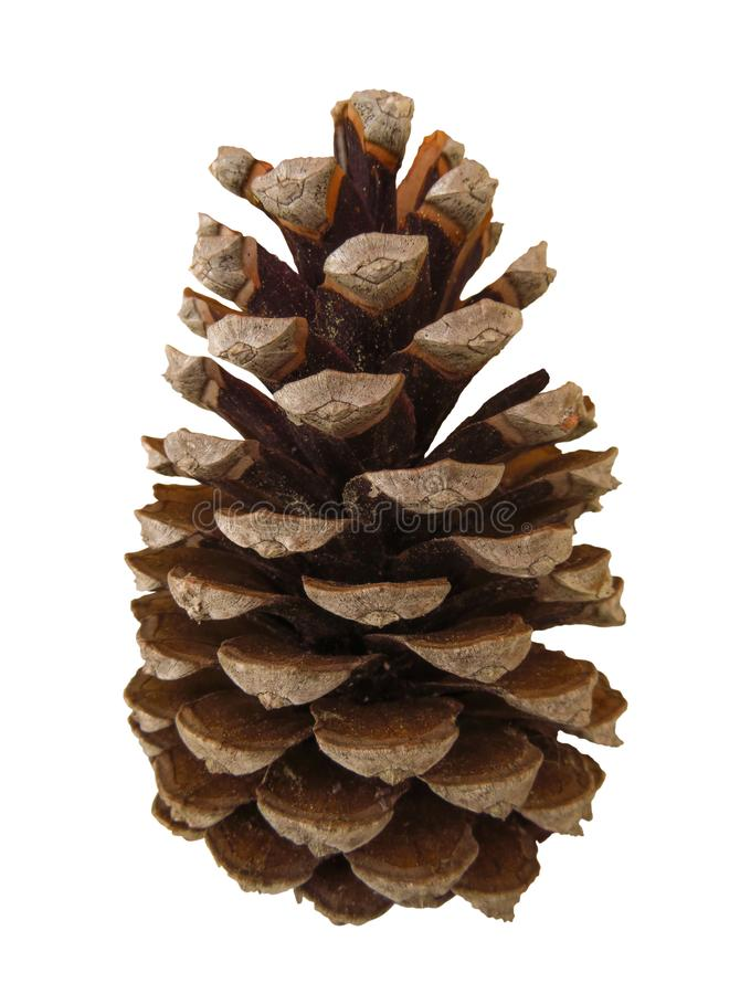 Pine cone isolated. On white with Clipping Path stock image