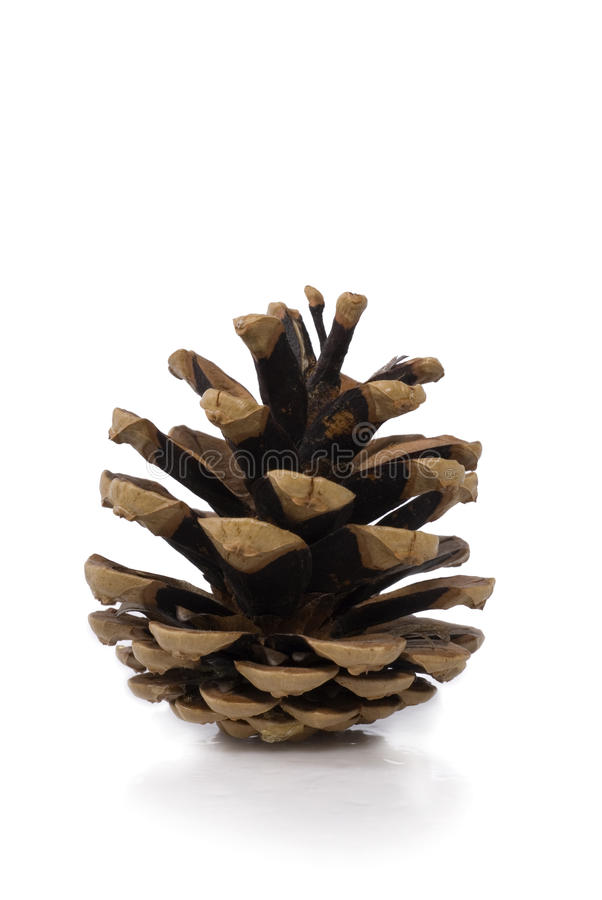 Free Pine Cone On White Background Royalty Free Stock Image - 21999246