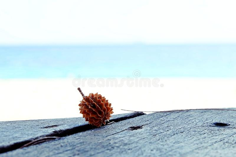 Pine cone on the sea view royalty free stock photography