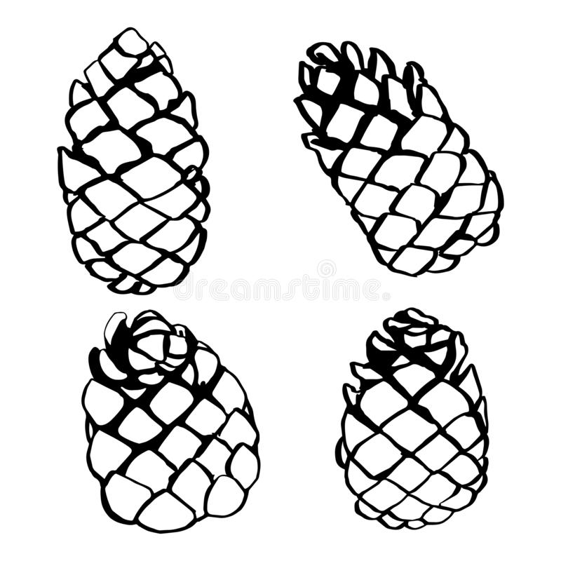 Free Pine Cone Set Hand Drawn Vector Illustration Stock Images - 165721214