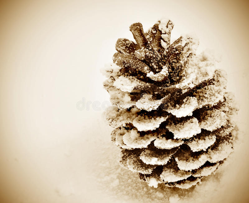 Download Pine Cone On The Snow Royalty Free Stock Photography - Image: 21349497