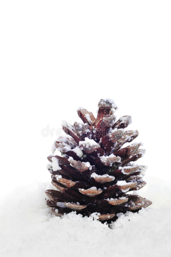 Download Pine cone on the snow stock photo. Image of ornament - 25181926
