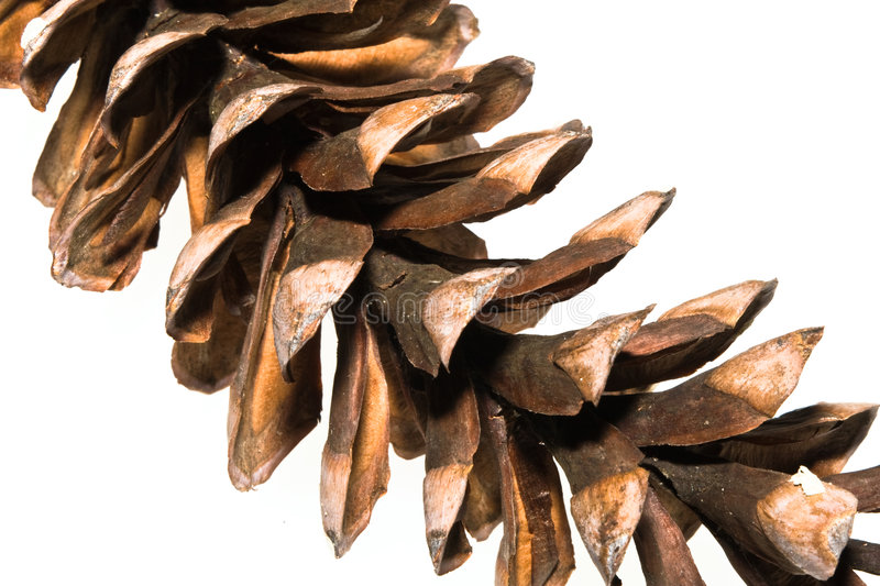 Download Pine Cone on White stock image. Image of details, conifer - 8540789