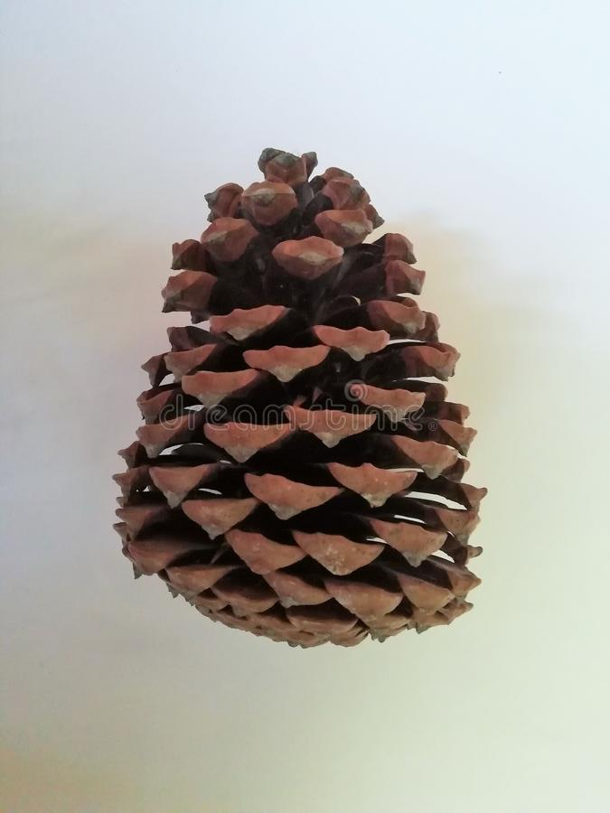 Pine cone on white background royalty free stock images