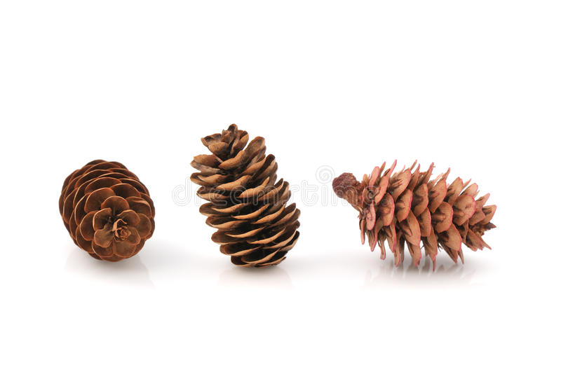 Download Pine Cones Royalty Free Stock Photo - Image: 11815505