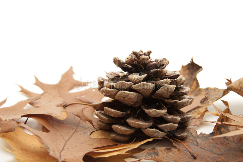 Download Pine cones stock image. Image of vein, fall, cone, form - 16991531