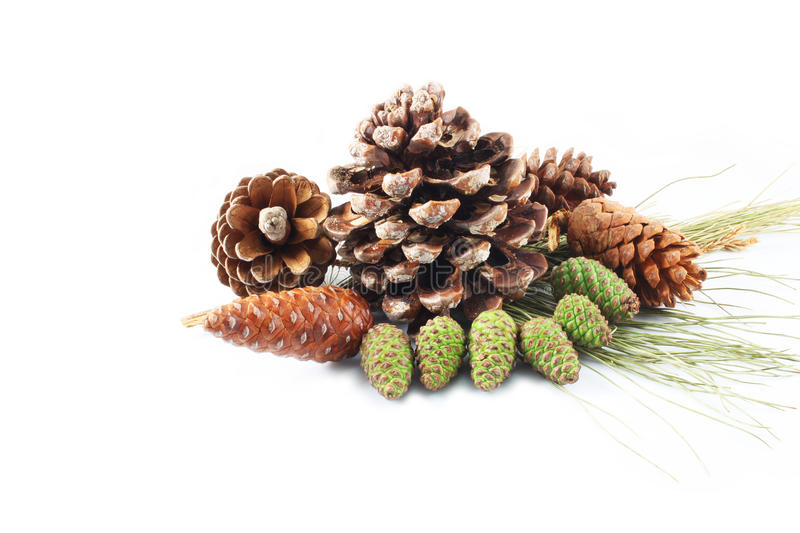 Pine cones. On white background royalty free stock image