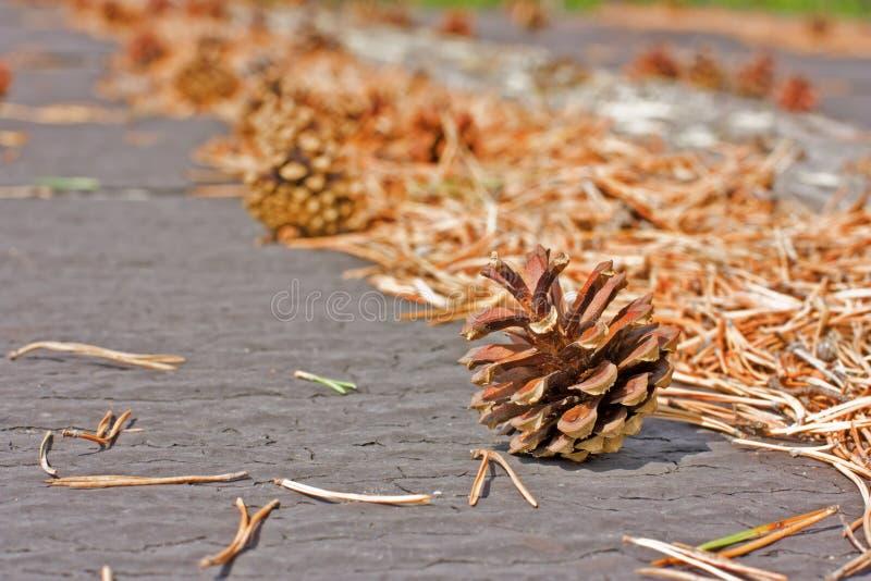 Download Pine Cones Stock Photo - Image: 28596710