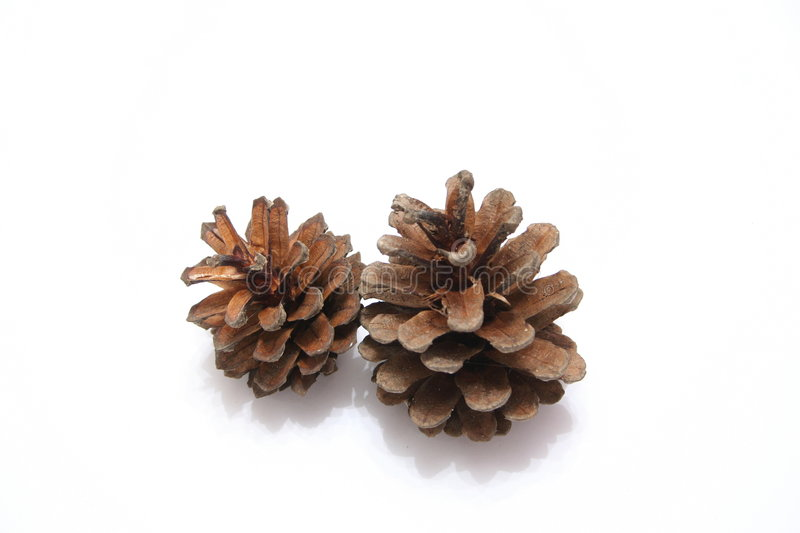 Download Pine Cones stock photo. Image of decoration, flora, detail - 497314
