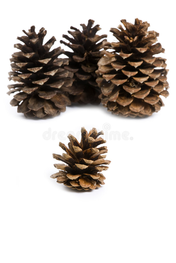 Download Pine Cones stock image. Image of pine, isolated, brown - 7203871