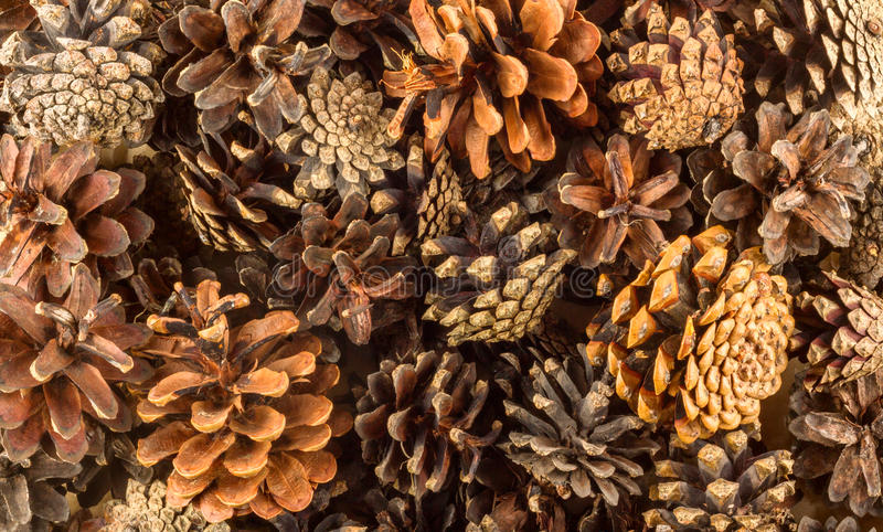 Pine cones background. Pine cones brown and beige background stock photos