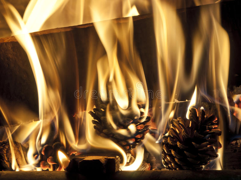 Pine cones burning in the fire place royalty free stock image