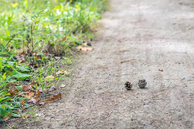Pine cones fallen from a tree. Sandy forest path with two pine cones fallen from a tree royalty free stock photos