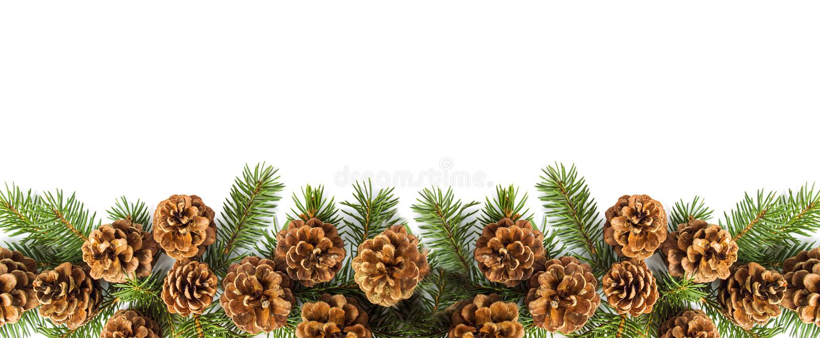 Pine cones festive background with fir branch stock photo