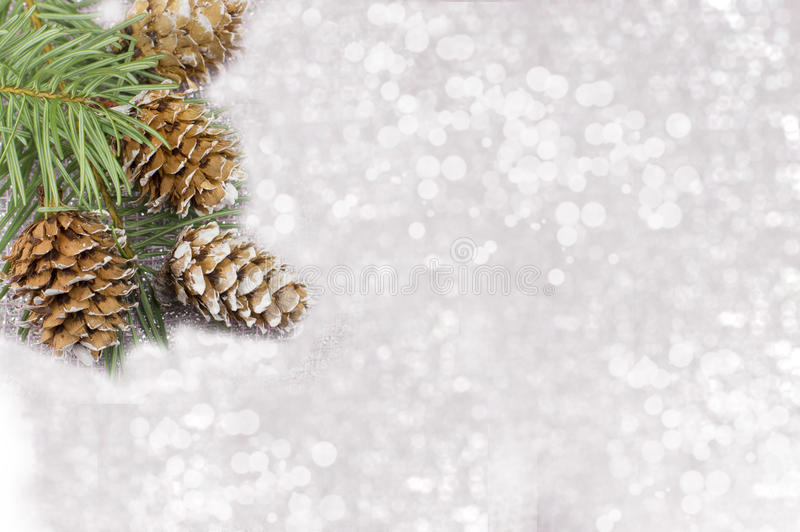 Pine cones and fir tree on sparkling background royalty free stock photo