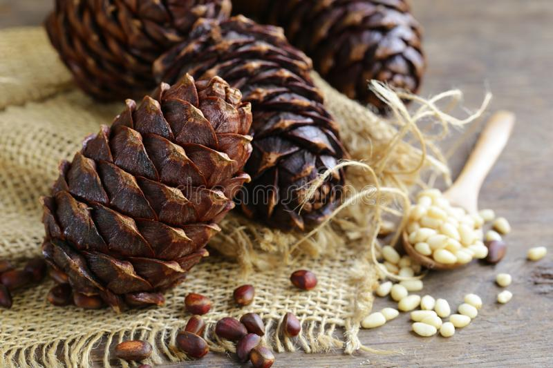 Pine cones and nuts stock image