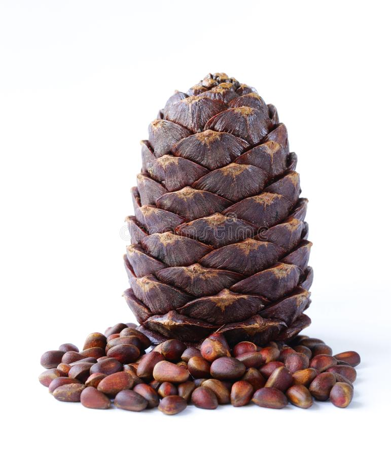 Pine cones and nuts stock photography