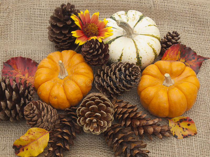 Image result for pine cones and pumpkin
