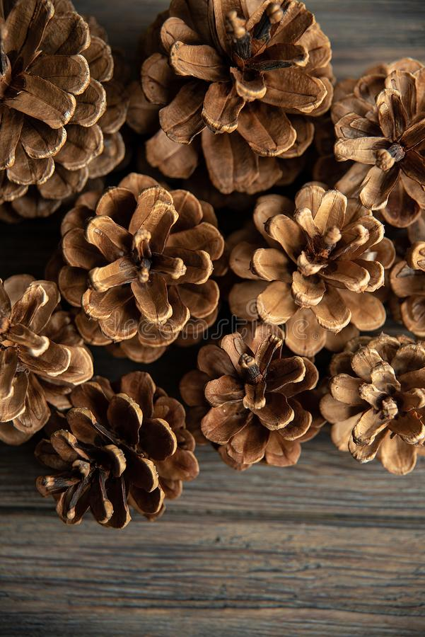 Pine cones on rustic, dark wood background. Still life with directional, natural light. Macro with shallow dof. Close up stock images