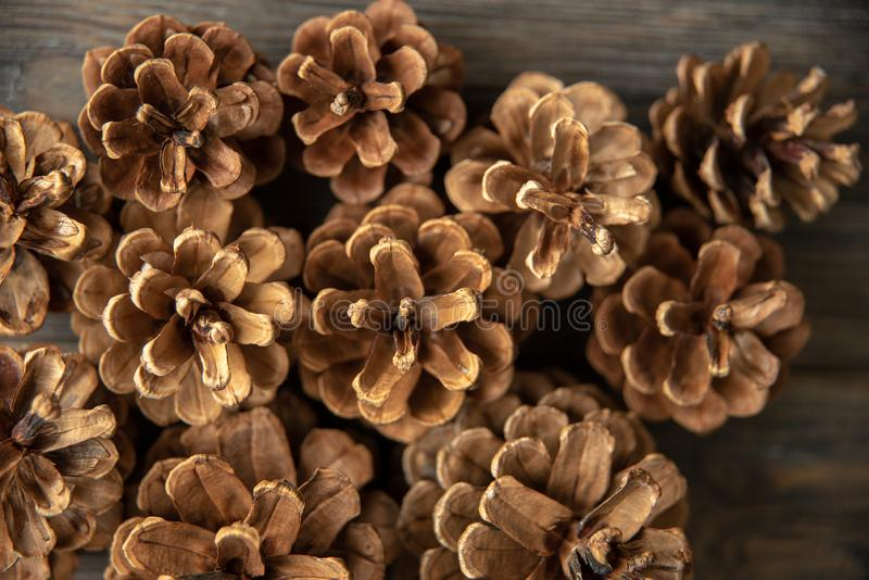 Pine cones on rustic, dark wood background. Still life with directional, natural light. Macro with shallow dof. Close up royalty free stock images