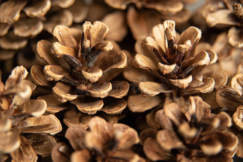 Pine cones on rustic, dark wood background. Still life with directional, natural light. Macro with shallow dof. Close up, holiday, christmas, winter, decor royalty free stock photography