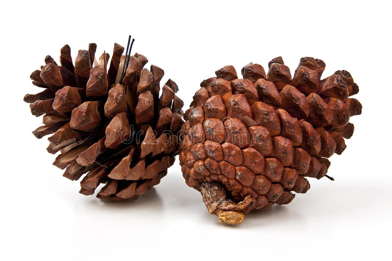 Download Pine Cones On White Background Stock Photo - Image: 27814114