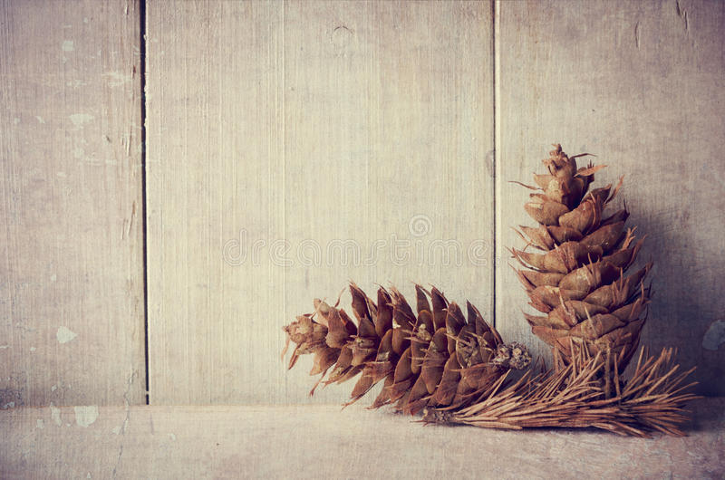 Pine cones. On white rustic background with copyspace royalty free stock images
