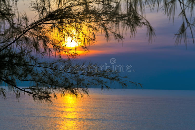 Pine and dawn. At Ban Krut Beach, Prachuap Khirikhun Province Thailand royalty free stock photography