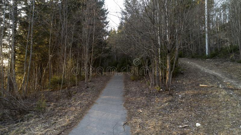 Pine forest in the beginning of spring. Forest after winter landscape. stock images