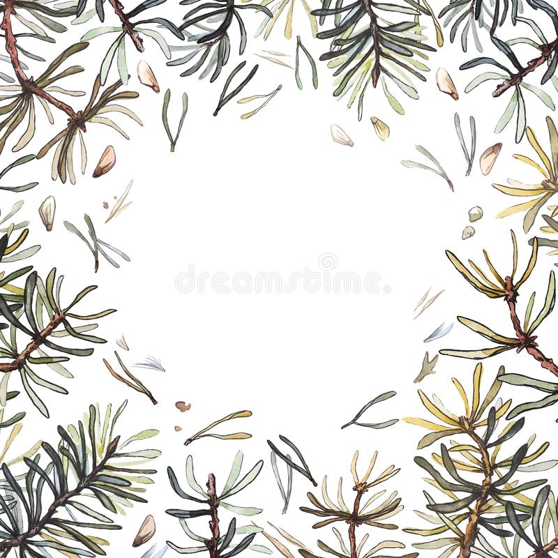 Pine forest frame, watercolor illustration. Pine branches composition. Accurate realistic watercolor coniferous pine branches composition, botanical stock illustration