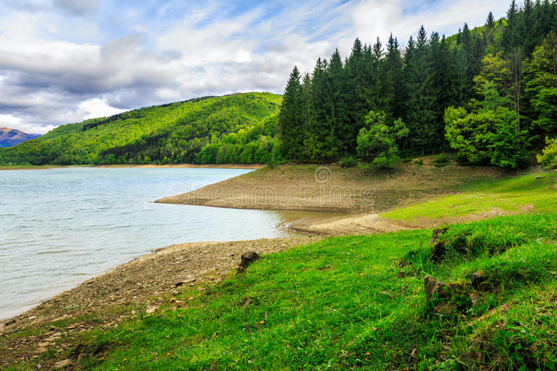Pine forest and lake near the mountain royalty free stock photography