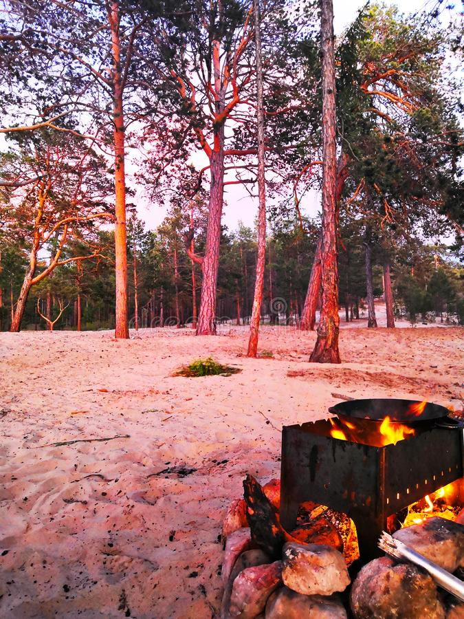 Pine forest lit by the sunset, barbecue with a cauldron on the fire. A brazier with a cauldron on the fire on the background of pine lit by the summer sunset royalty free stock photo