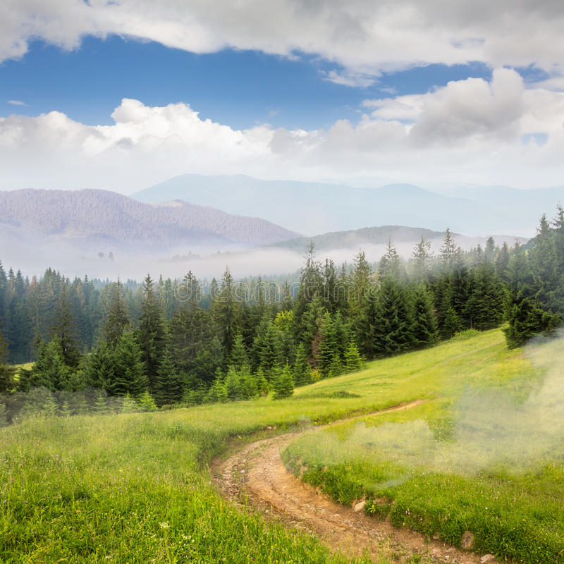 Pine forest on a mountain slope stock photos