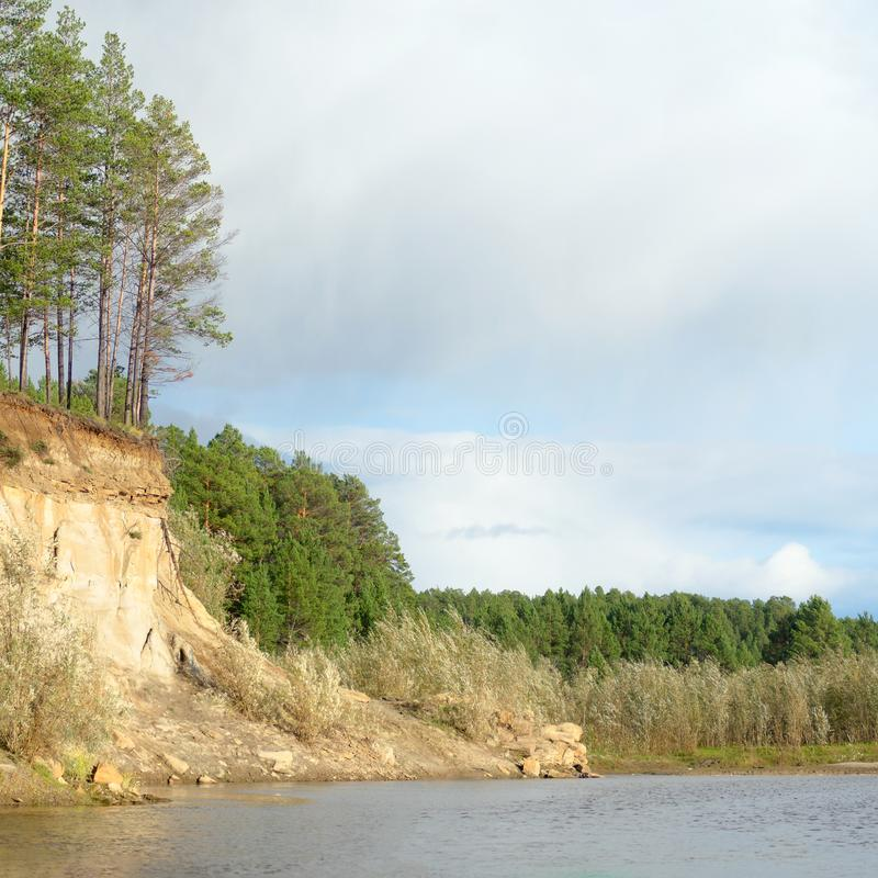 Free Pine Forest On A Cliff Near The Bank Of The River With Erosion Of Clay Soil And Layers Of Land Under The Roots Of Trees Stock Photos - 159769033