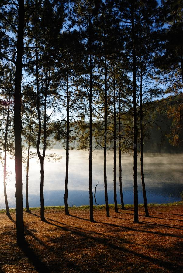 Pine forest at Pang Ung, Mea Hong Son Province, Thailand. stock photos
