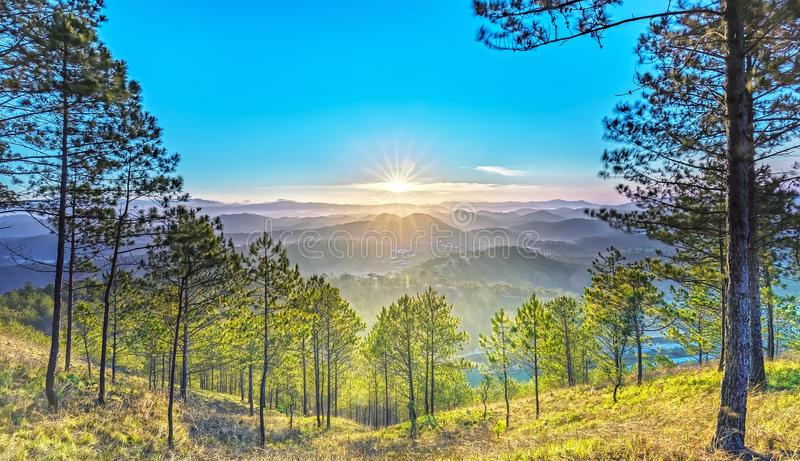 Pine forest path to sun rays. Path to sun rays a pine forest with long sun rays pass through valley with pines yellow sunny mornings this place more lively, warm royalty free stock photography