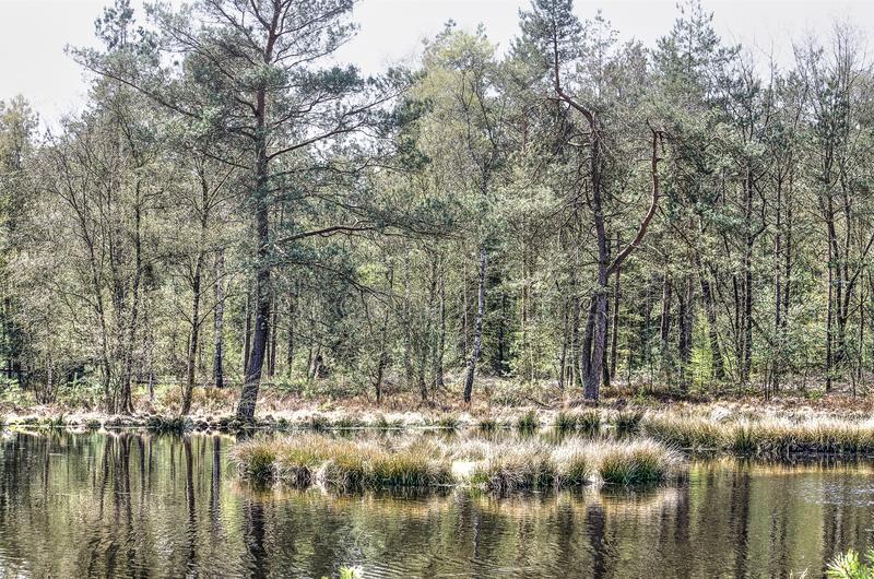 Forest lake reflection. Pine forests reflect in the calm waters of a small lake near Heerde, The Netherlands stock photo