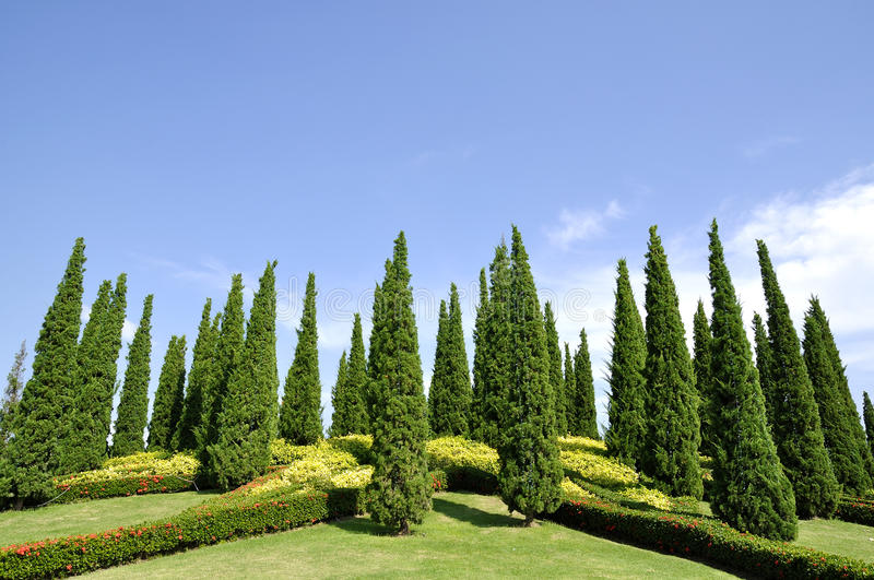 Download Pine garden,outdoor space stock image. Image of background - 17538873