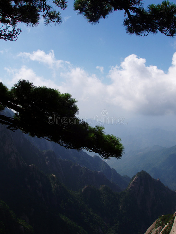 The pine at Huangshan in China royalty free stock photo